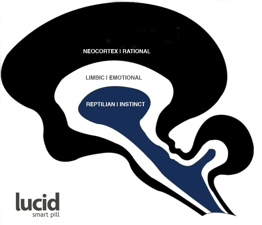 Lucid Smart Pill Brain