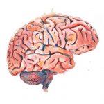 Brain - Watercolour